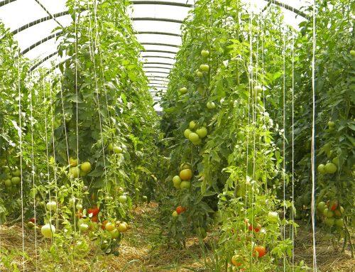 13 septembre 2017 – Agriculture biologique : Mythes et réalités