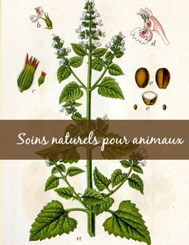 8. Guide-Conseil spécialisé en Soins naturels pour animaux