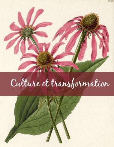 5. Guide-Conseil spécialisé en Culture et transformation