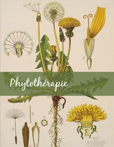 1. Guide-Conseil spécialisé en phytothérapie