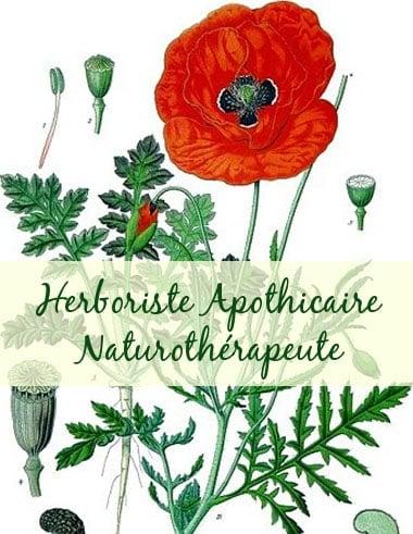 3-Herboriste Apothicaire Naturothérapeute