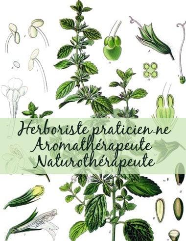 1-Herboriste praticien-ne Aromathérapeute Naturothérapeute