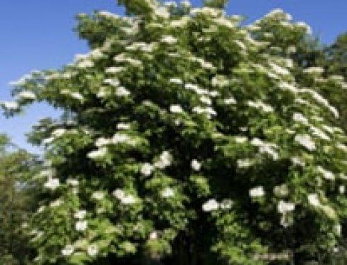 La ronde des arbres celtiques