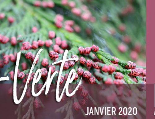 Info-Verte – Janvier 2020 – Familles botaniques des Huiles essentielles