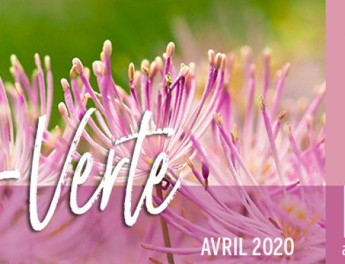 Info-Verte – Avril 2020 – Familles biochimiques des H.E. − Diathèse infection  −