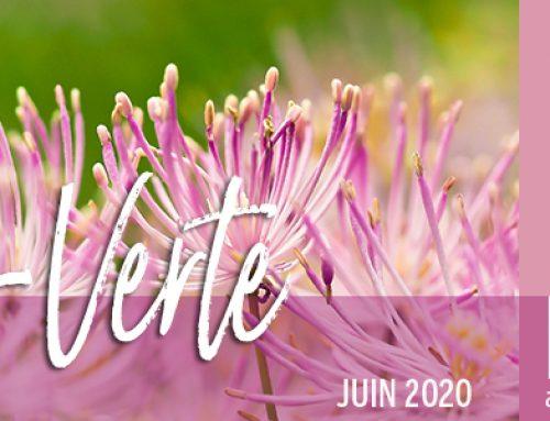 Info-Verte – Juin 2020 – Les suppléments : quand, comment ?