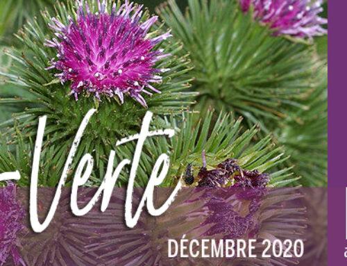 Info-Verte – Décembre 2020 – Les plantes magiques des sorcières
